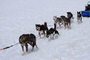 ROVANIEMI escursione in slitta trainata dagli husky