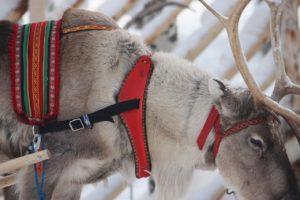 giro in slitta con le renne di Babbo Natale