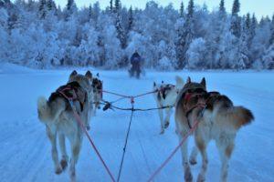 passeggiata in slitta trainata dagli huskies